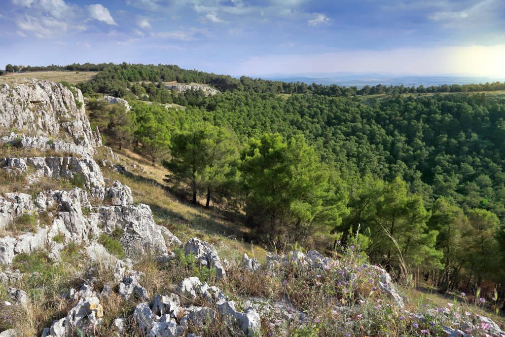 National park in Italy. Pulicchio di Gravina - sinkhole in Murge plateau (Altopiano delle Murge). Alta Murgia National Park.