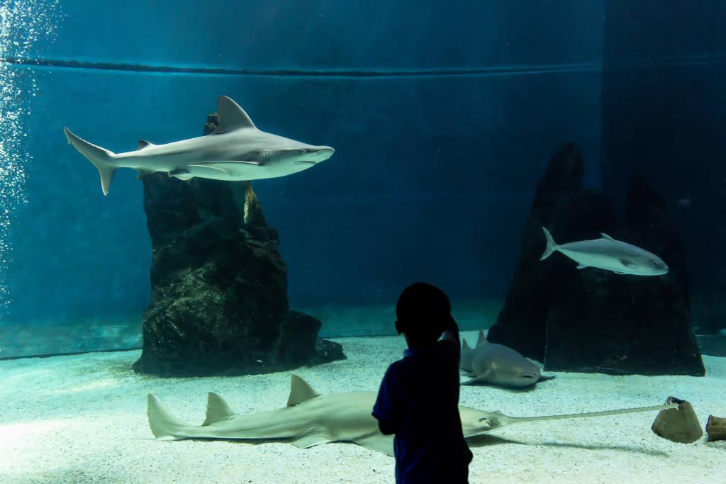 Genoa, Liguria, July 19, 2019: visiting the aquarium of Genoa, Liguria, Italy