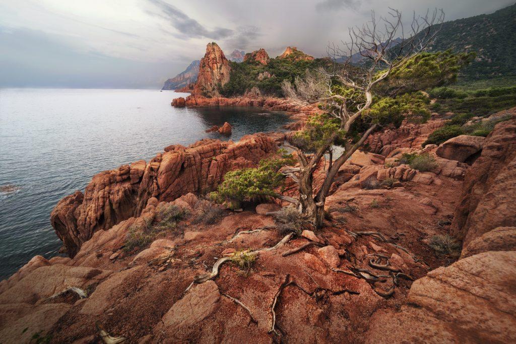 A beautiful shot of a bare tree grown through rock formations near the sea in Arbatax, Sardinia, Italy
