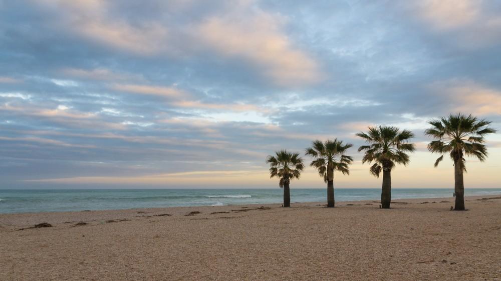 Palms,On,The,Beach.,Civitanova,,Italy.