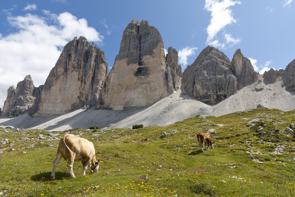View to the famous Tre Cime di Lavaredo (German: Drei Zinnen). The meadow in foreground is seen a typical alpine pasture. Tre cime are one of the best-known mountain groups in the European Alps.